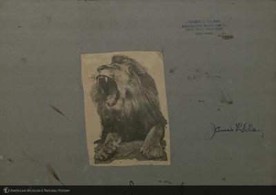 http://lbry-web-002.amnh.org/san/mo_exhibition/ppc_533_b06_f128_002v.jpg