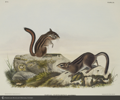 http://lbry-web-002.amnh.org/san/naturalhistories/b10621283_3.jpg