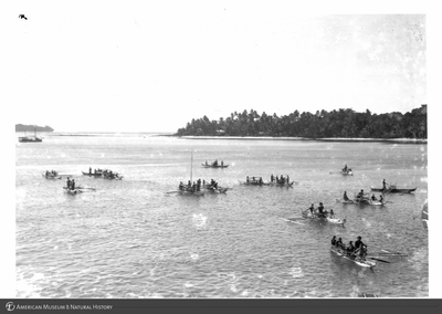 http://lbry-web-002.amnh.org/san/to_upload/Beck-PapuaNewGuinea/NG-5x7-prints/115773.jpg