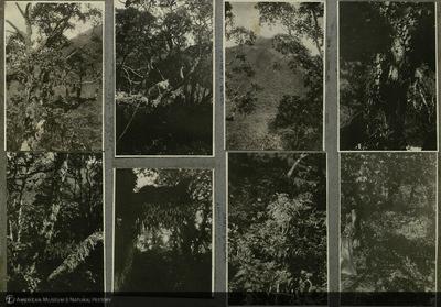 http://lbry-web-002.amnh.org/san/mo_exhibition/ppc_533_b11_f239_003.jpg