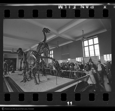 http://lbry-web-002.amnh.org/san/to_upload/35mm_halls_new/600176_11.jpg
