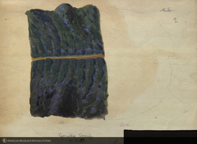 http://lbry-web-002.amnh.org/san/mo_exhibition/art002_b1_19.jpg