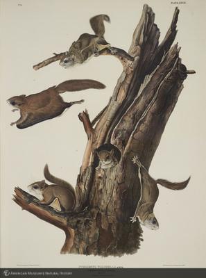 http://lbry-web-002.amnh.org/san/naturalhistories/b10621283_4.jpg