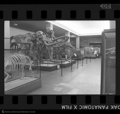 http://lbry-web-002.amnh.org/san/to_upload/35mm_halls_new/64099_20.jpg