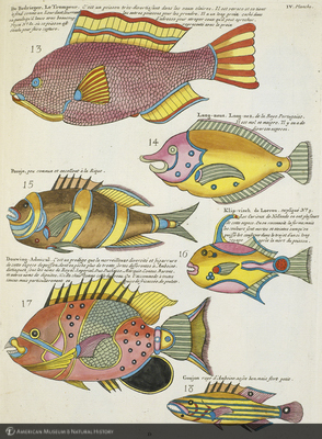 http://lbry-web-002.amnh.org/san/naturalhistories/b10715216_3.jpg