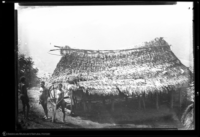 http://lbry-web-002.amnh.org/san/to_upload/Beck-PapuaNewGuinea/NG-5x7-negs/115536.jpg