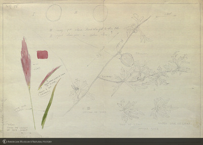http://lbry-web-002.amnh.org/san/mo_exhibition/art002_b1_03.jpg
