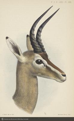 http://lbry-web-002.amnh.org/san/naturalhistories/b11267173_2.jpg