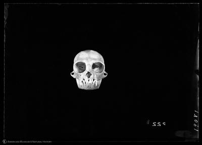 http://lbry-web-002.amnh.org/san/to_upload/5x7/19081.jpg