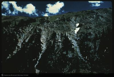 http://lbry-web-002.amnh.org/san/35mm/K7528.jpg