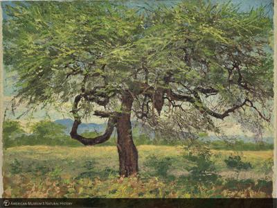 http://lbry-web-002.amnh.org/san/palais-de-tokyo-loan-paintings/100101670.jpg