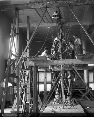 http://images.library.amnh.org/d/t/8x10/0001/00034798_l.jpg