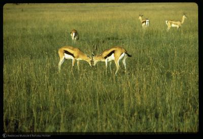 http://lbry-web-002.amnh.org/san/35mm/K14415.jpg