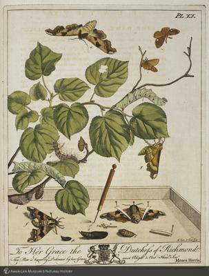 http://lbry-web-002.amnh.org/san/naturalhistories/b10836809_1.jpg
