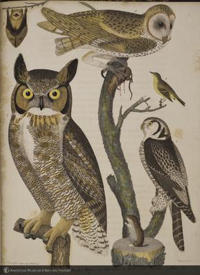 http://lbry-web-002.amnh.org/san/naturalhistories/b10203680_1.jpg
