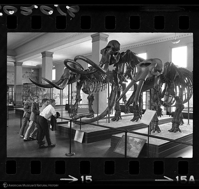 http://lbry-web-002.amnh.org/san/to_upload/35mm_halls_new/602016_15.jpg