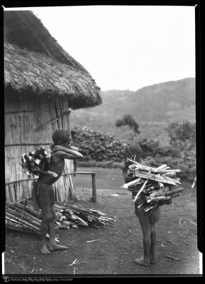 http://lbry-web-002.amnh.org/san/to_upload/Beck-PapuaNewGuinea/NG-5x7-negs/115555.jpg