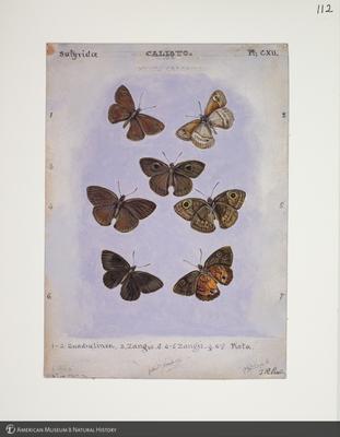 http://lbry-web-002.amnh.org/san/to_upload/titianbutterflies/b1083009_122.jpg