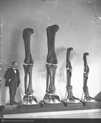 http://images.library.amnh.org/d/t/8x10/0001/00035044_l.jpg