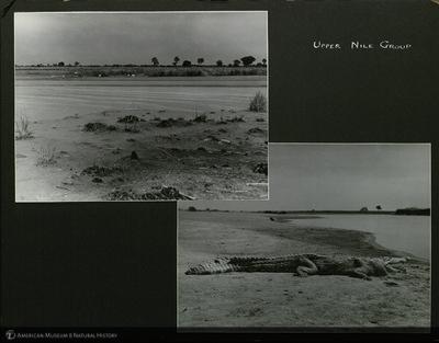 http://lbry-web-002.amnh.org/san/mo_exhibition/ppc_533_b12_f254_010.jpg