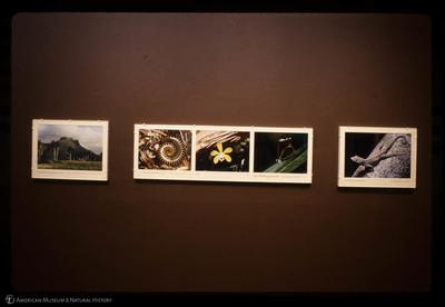 http://lbry-web-002.amnh.org/san/35mm/psc-103e-177.jpg