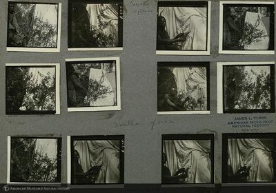 http://lbry-web-002.amnh.org/san/mo_exhibition/ppc_533_b11_f240_004.jpg