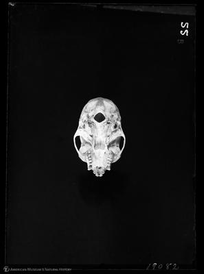 http://lbry-web-002.amnh.org/san/to_upload/5x7/19082.jpg