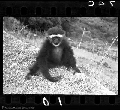 http://lbry-web-002.amnh.org/san/to_upload/35mm/VHC-Q010.jpg