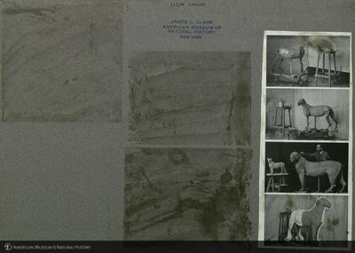 http://lbry-web-002.amnh.org/san/mo_exhibition/ppc_533_b02_f047_011.jpg