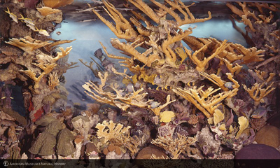 http://lbry-web-002.amnh.org/san/to_upload/color/watermarked/00001480_l.jpg