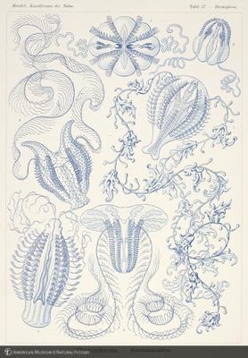 http://lbry-web-002.amnh.org/san/naturalhistories/b10528283_5.jpg