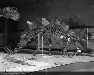 http://images.library.amnh.org/d/t/8x10/0002/00326557_l.jpg