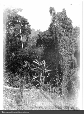 http://lbry-web-002.amnh.org/san/to_upload/Beck-PapuaNewGuinea/NG-5x7-prints/117451.jpg