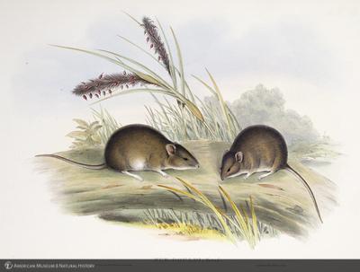 http://lbry-web-002.amnh.org/san/naturalhistories/b10303133_4.jpg