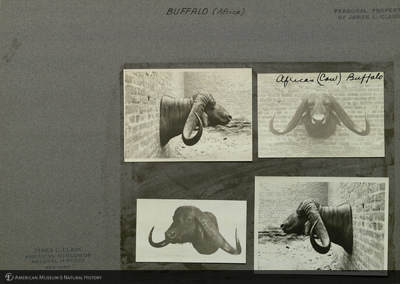 http://lbry-web-002.amnh.org/san/mo_exhibition/ppc_533_b01_f010_008.jpg