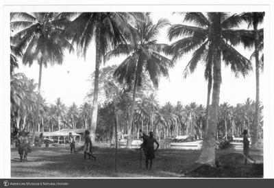 http://lbry-web-002.amnh.org/san/to_upload/Beck-PapuaNewGuinea/NG-5x7-prints/115648.jpg