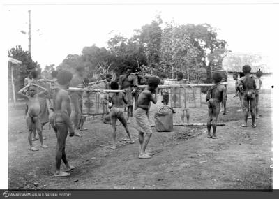 http://lbry-web-002.amnh.org/san/to_upload/Beck-PapuaNewGuinea/NG-5x7-prints/115529.jpg