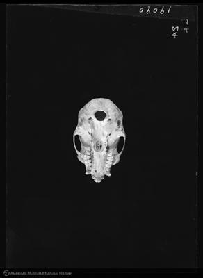 http://lbry-web-002.amnh.org/san/to_upload/5x7/19090.jpg