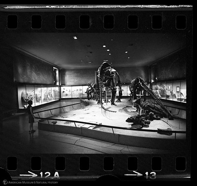 http://lbry-web-002.amnh.org/san/to_upload/35mm_halls_new/602863_13.jpg