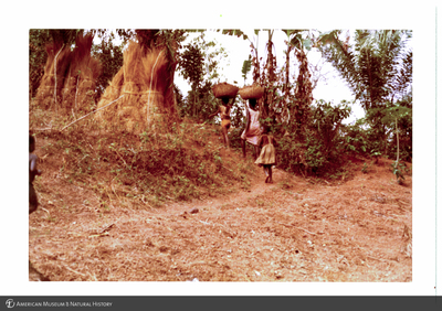 http://lbry-web-002.amnh.org/san/photoprintcollections/Arth/ppc-a78-100213279-12.jpg