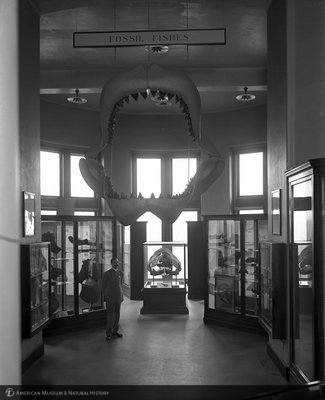 http://images.library.amnh.org/d/t/8x10/0001/00032522_l.jpg
