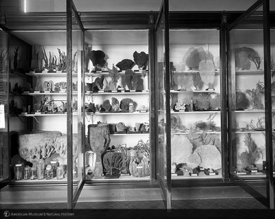 http://images.library.amnh.org/d/t/8x10/0001/00000379_l.jpg
