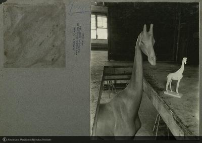 http://lbry-web-002.amnh.org/san/mo_exhibition/ppc_533_b02_f029_008.jpg