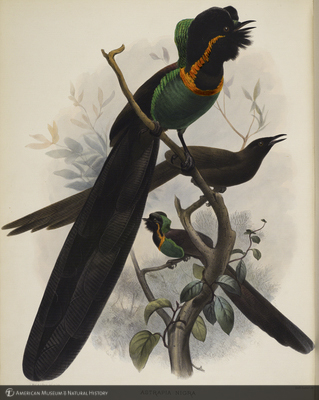 http://lbry-web-002.amnh.org/san/naturalhistories/b10610169_6.jpg