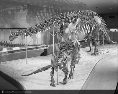 http://images.library.amnh.org/d/t/8x10/0002/00322534_l.jpg