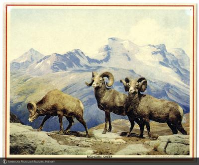 http://lbry-web-002.amnh.org/san/AMNH_postcards/100213323_59.jpg