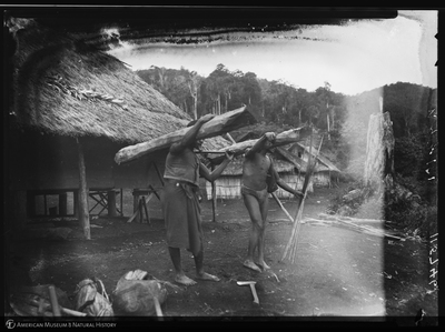 http://lbry-web-002.amnh.org/san/to_upload/Beck-PapuaNewGuinea/NG-5x7-negs/115746.jpg