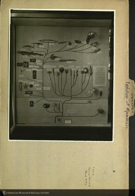 http://lbry-web-002.amnh.org/san/mo_exhibition/ppc_532_b07_f104_008.jpg
