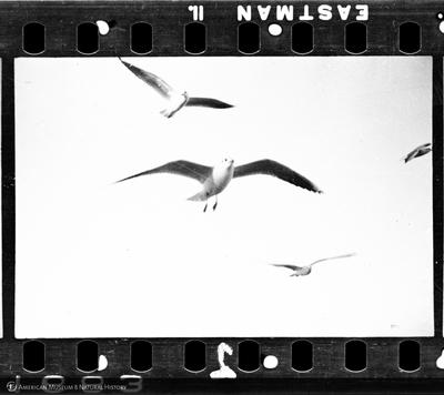 http://lbry-web-002.amnh.org/san/to_upload/35mm/VHC-C002.jpg