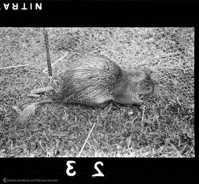http://lbry-web-002.amnh.org/san/to_upload/35mm/VHC-H023.jpg